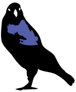 bowerbirdq